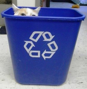 cat in recycling can